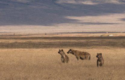 safariMasaiMara