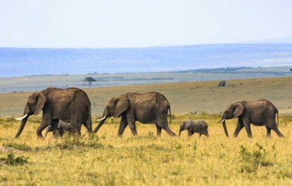 safariTanzania02